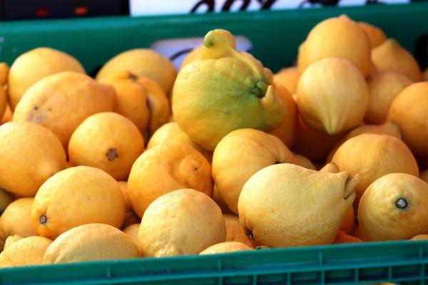 Farmers market citrus