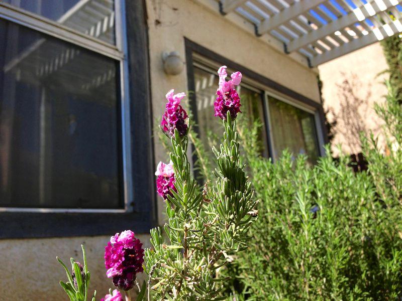Spring plants 2013 2