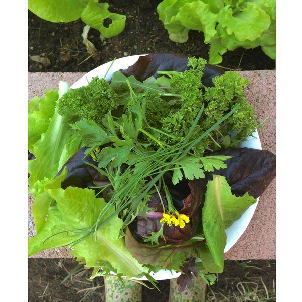 Salad greens 2013