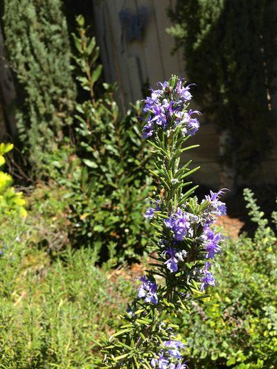 Vegatble garden spring 2013 2